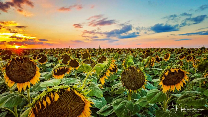 Garden City Kansas Landscape Photography